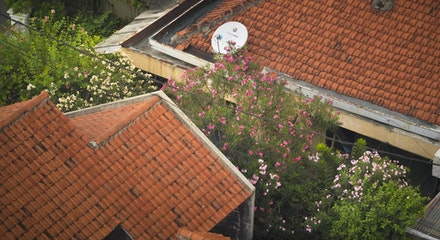 Urban colour - Hidden garden between the tiles