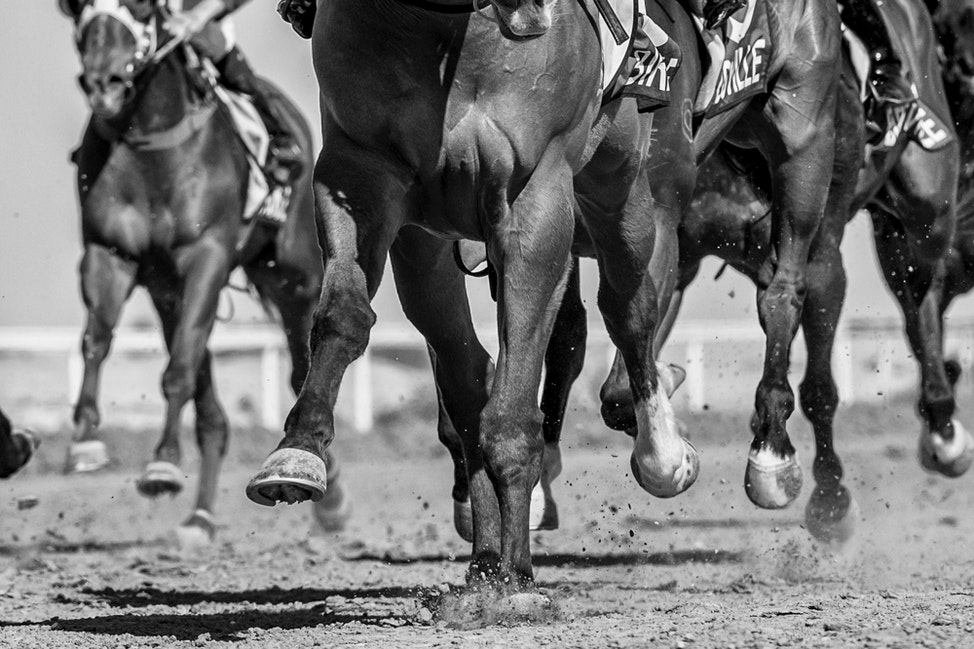 Race 9, FInish, Hooves_04-09-16, Birdsville_539