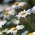 Flowertots.. - Toowoomba, Australia.