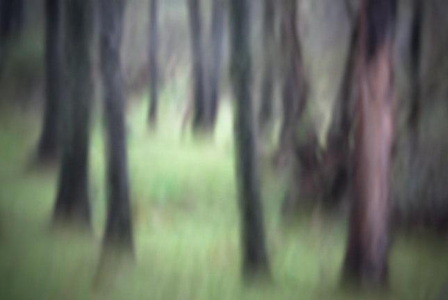 The Grove... - Jimna, Queensland, Australia.