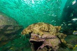 UNDERWATER WORLD - Images captured whilst Scuba diving in our local waters and abroad.