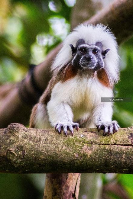 14 - Monkey