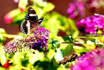 5 - Butterfly