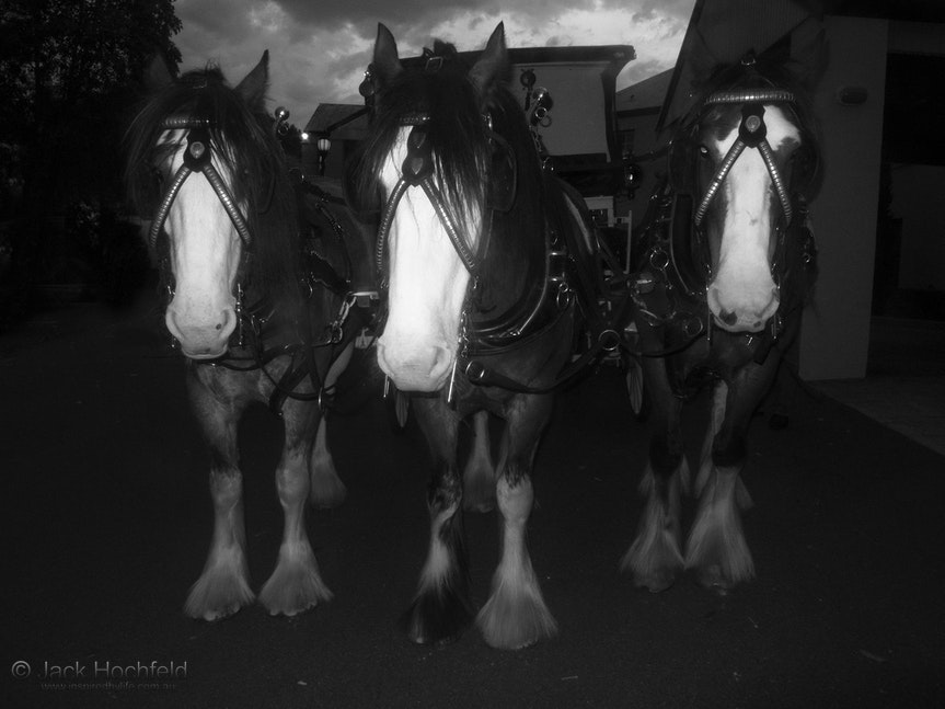 Clydesdale's horse-drawn carriage - Clydesdale's horse-drawn carriage