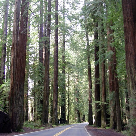 Redwood Drive By - This work by Pauline Jo Overly is licensed under a Creative Commons Attribution-NoDerivs 3.0 Unported License.