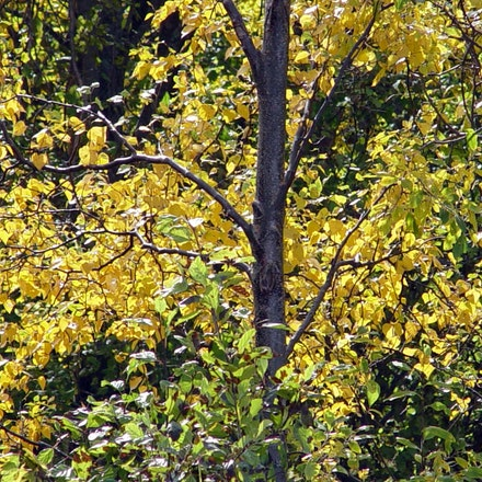 Birch Turning