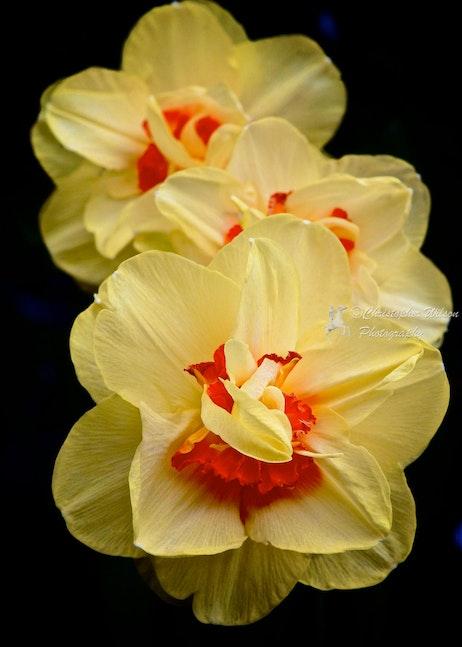Spring Flower 018