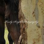 Equine Natural