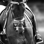 Equine In Black & White