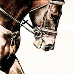 Equine Enhanced Images - Example of Equine Enhancements