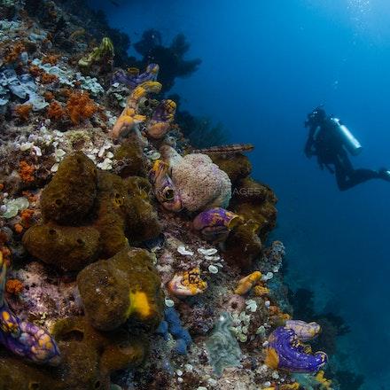 Dunia Kecil, Raja Ampat - Dunia Kecil ('small world') dive site, Penemu Island, Raja Ampat.