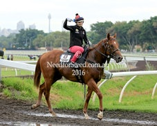 21 JAN 2016 RANDWICK TRACK WORK
