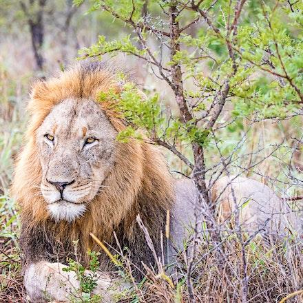 021 Thanda Safari Lodge 030515-8162-Edit