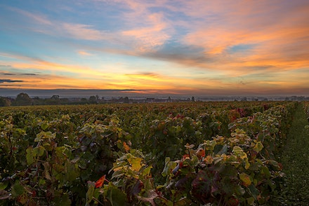 Sunrise over the vineyards in near Nuits-St Georges, Burgundy, France - 057 Burgundy 051015-1296-2