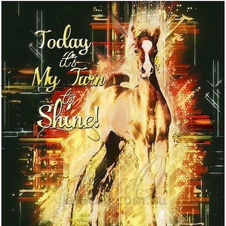 Today is My Turn to Shine - Purebred Arabian colt foal standing up for the world to see. Attitude to burn.