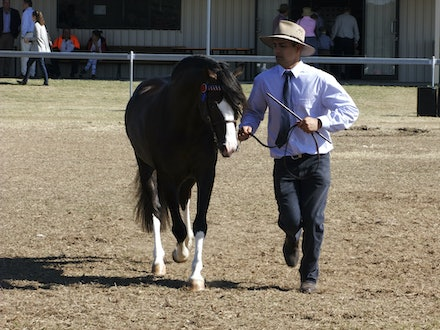 Laildey Show 2014 - Images from the 2014 Laidley Show