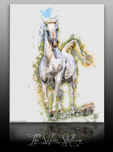 Silver Stallion on canvas - The Silver Stallion on canvas ready to hang to frame.