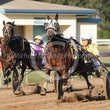Gympie 25 07 15 Harness - Photos taken by Michael McInally
