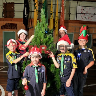 Sunbury Scouts are taking orders for real Christmas trees as part of an annual fundraiser - Photos by Damjan Janevski.