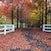 Oak Road Autumn 12 May 2014 IMG_1594 1050