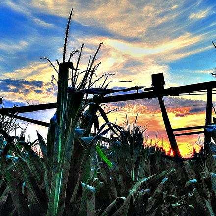 At a Stand Still 8.14.2014.2 - At a Stand Still. An irrigation pivot stands at rest in the midst of a Cortland, Nebraska cornfield. #nebraska #farm #sunset...
